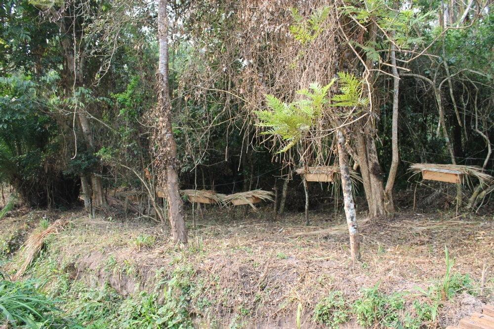 Aufforstung in Uganda